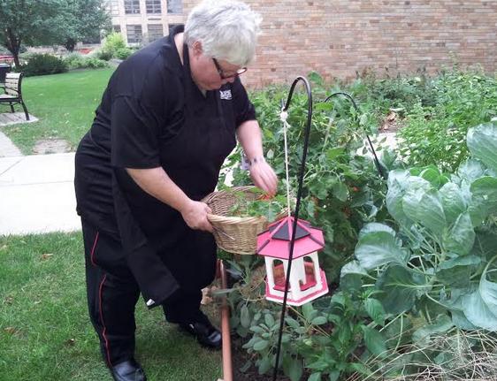 Ecology club's garden thrives
