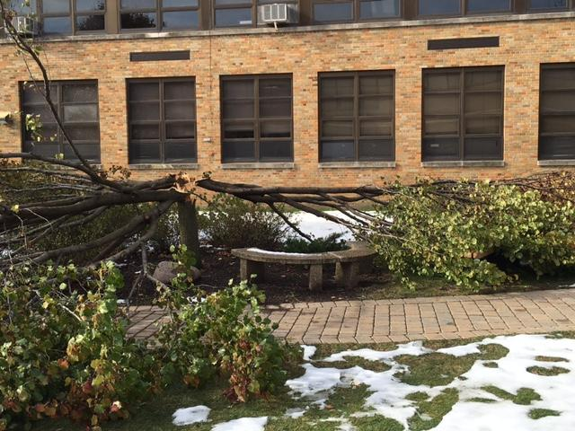 With more than seven inches falling in Hinsdale over the Nov. 20 - 22 weekend, the school experienced damage with one of its courtyard trees cracking down the middle from the weight of the snow.