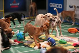 Puppies run and play in the 2016 Puppy Bowl.