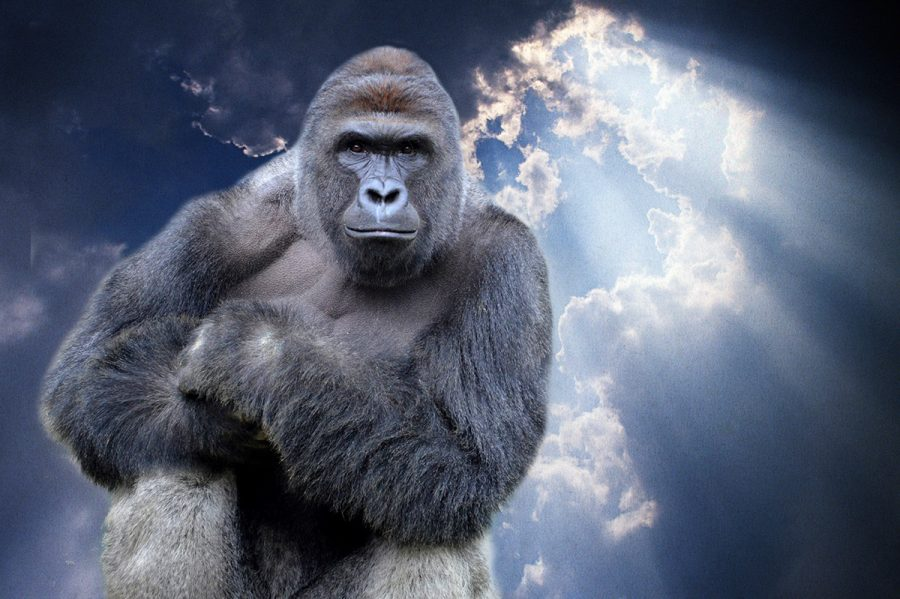 After the death of the iconic gorilla, Harambe quickly turned into a famous icon.