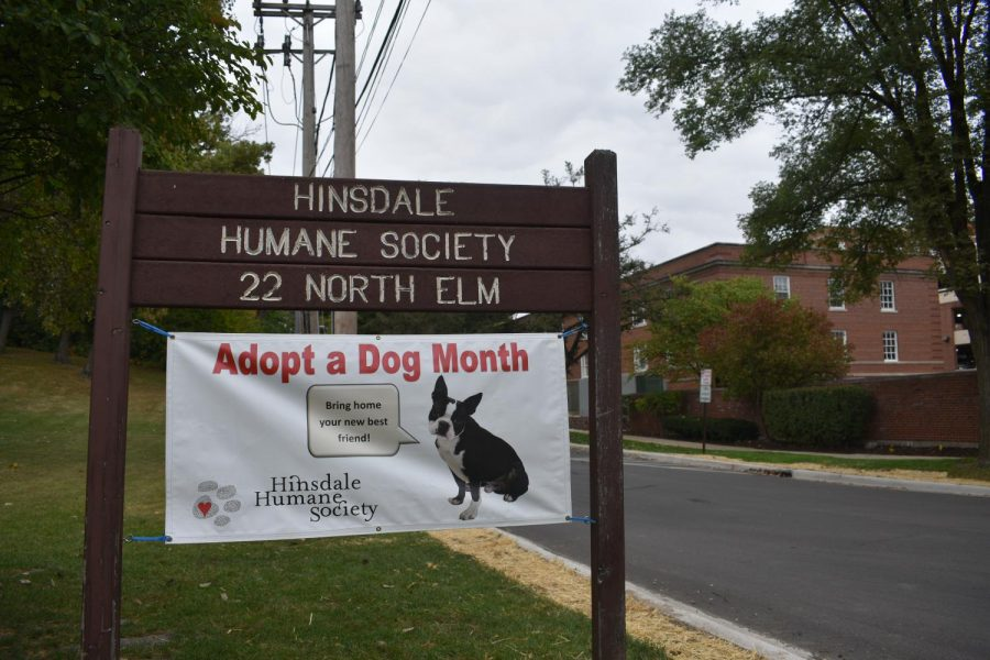 This month is Adopt a Dog Month at the Hinsdale Humane Society. Their main goal for this event is to get as many dogs as they can out of the shelter and into a new home. Bo, Holly, and many more dogs came to the Humane Society from Florida after Hurricane Irma.