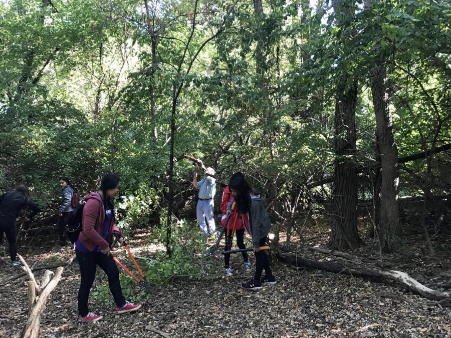 NHS members helped remove invasive plants from Churchill Woods/Glacial Ridge Forest Preserve on Saturday, Sept. 30 for the Day of Service.