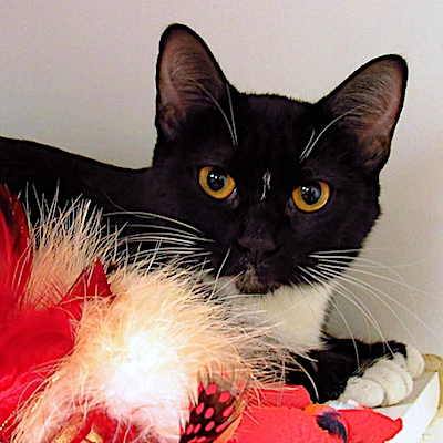 In time for a holiday adoption, aptly named Merry is available for adoption now at the Humane Society.