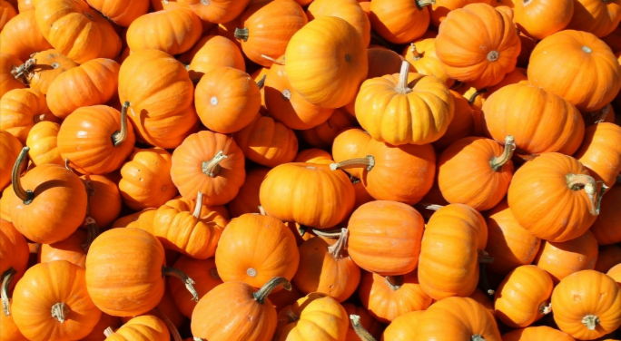 Pumpkins+are+a+monumental+part+of+our+culture+and+we+need+to+make+a+bigger+effort+to+show+that.+