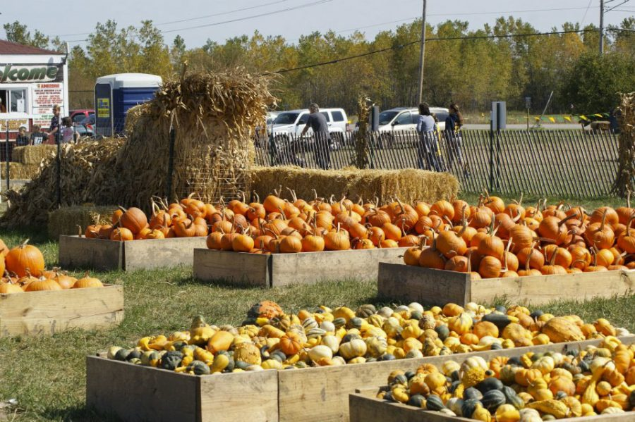 Odyssey Fun Farm is a pumpkin patch  and petting zoo located in Tinley Park.