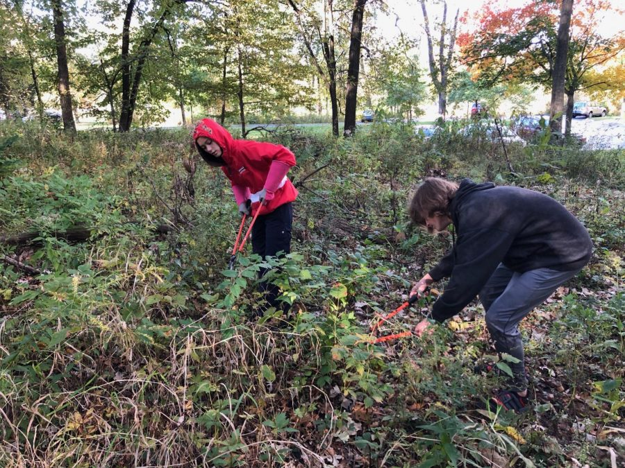 Students clean up at the Maple Grove Forest Preserve during the Day of Service on Oct. 19.