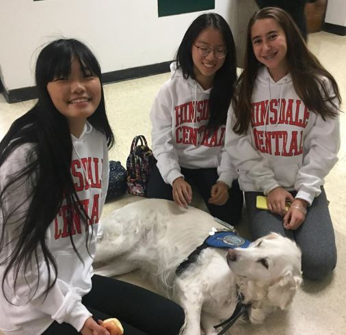 Angel, a comfort dog, visits the school weekly when possible to help students and staff de-stress.