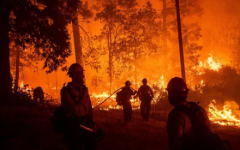 El Dorado has been spreading rapidly and has burned over 10,000 acres of land on the West Coast.
