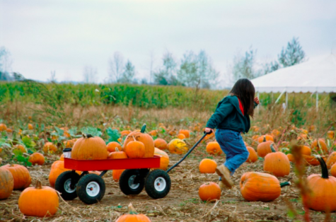 While this year may be different due to COVID-19, there are still ample opportunities and activities to do to fully take advantage of the fall season.