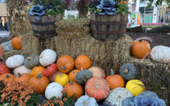Oakbrook Center, shopping mall in Oakbrook, Ill, presents a grand pumpkin display, exciting many for the 31. Check out this fall vibe while perusing stores for your favorite costume.